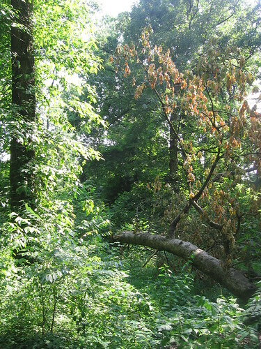 Fallen Tree in Old Forest