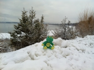 Frog Q in Snow by Lake Pend Oreille