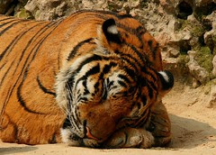Let the sleeping tigers lie........................... or..... Rock a bye, baby...