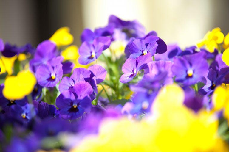 Primavera stagione di matrimoni ma anche di fiori.