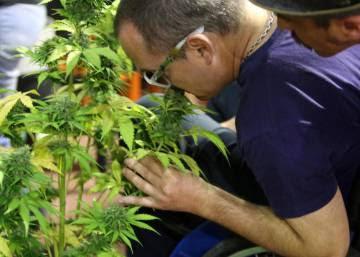 México aprueba el uso medicinal de la marihuana