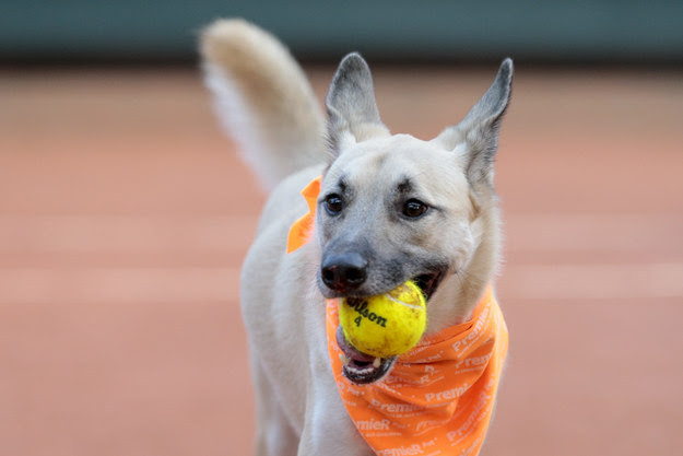 """""""We want to show that abandoned dogs can be adopted and trained,"""" Andrea Beckert, a trainer from the Association of Animal Wellbeing, told CNN. """"After all, it's not easy to get a dog to only pick up the lost balls, and then to give them up!"""""""