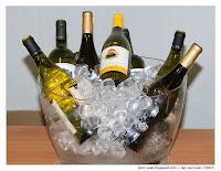 Bílá vína Bolgheri