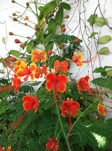 Orange roadside flower