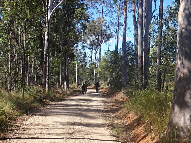 Lockyer State Forest