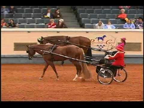 Hot Diggity Joe 1998 Sorrel Stallion, 16.1H Sire: Blazing Hot Dam: Jodie Fivette (Congress Champion and MULTIPLE AQHA World Show Top FIVE CHAMPION PRODUCER)