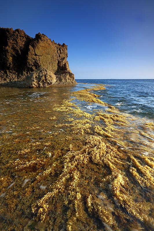 Seaweed Gorge