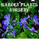 Garden Plants Nursery