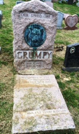 GrumpyDog_HatchingCat