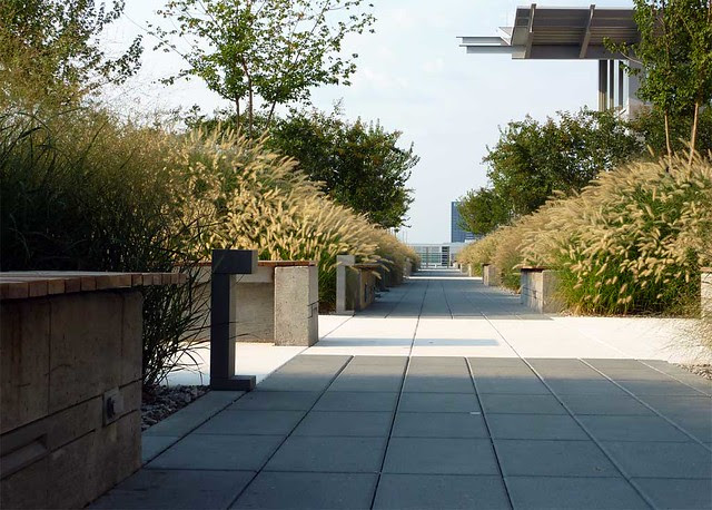 P1000041-2011-09-14-Clough-Bldg-GaTech-Rooftop-Garden-Green-Roof