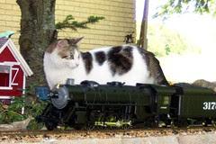 Cat Mountain Railroad