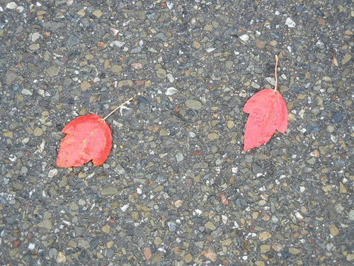 Red Leaves _ 8138