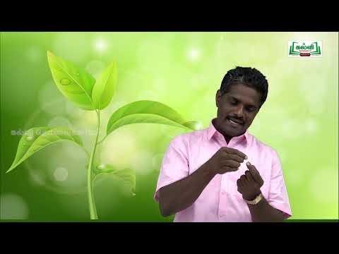 ஆய்வுக் கூடம் Std 8 Science அறிவியல் தாவரஉலகம் Kalvi TV