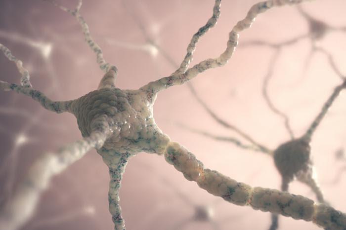 Nerve cells neurons