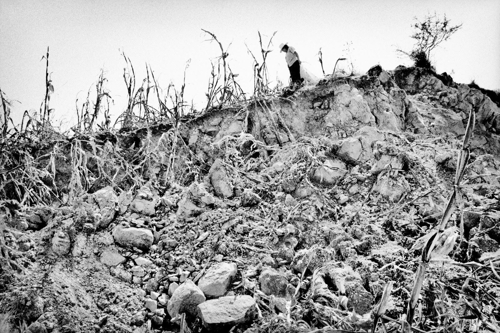 Harvesting a wrecked corn field. Santiago Mitlatongo, Mexico.