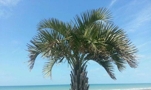 A tropical beach in Normandy?