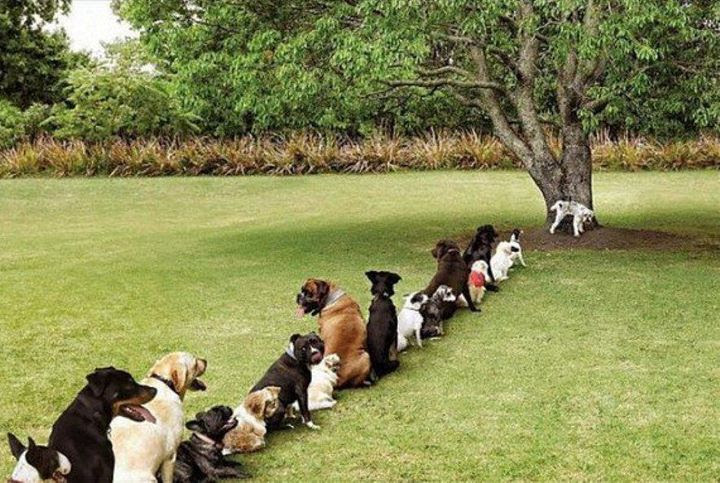 Image result for Dog and tree