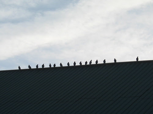 Birds on the roof in Mt Angel