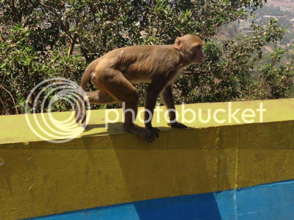 Monkey Pune Mumbai India