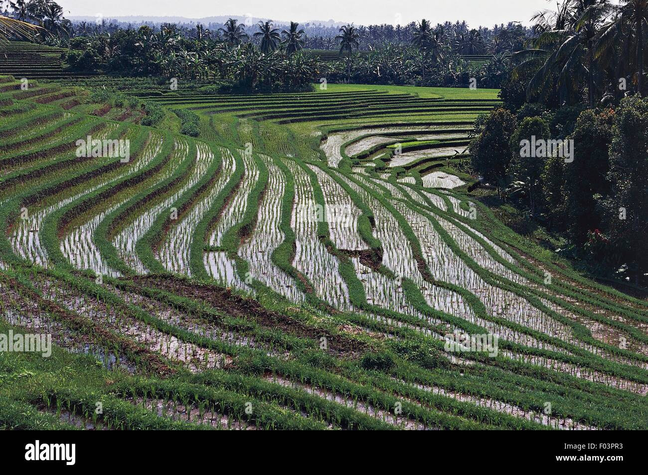Rice terraces, Tirta Gangga, Cultural Landscape of Bali Province Stock Photo, Royalty Free Image