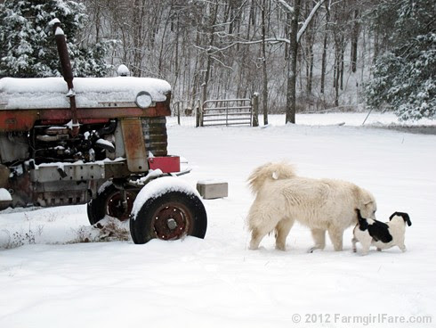 Snow dogs 11 - FarmgirlFare.com