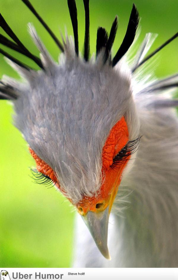 Not Many Birds Have Prominent Eyelashes But The Secretary Bird Sport