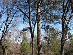 squirrel tree4