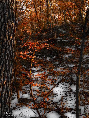 Winter Sunset, Stone State Park by ZetteG
