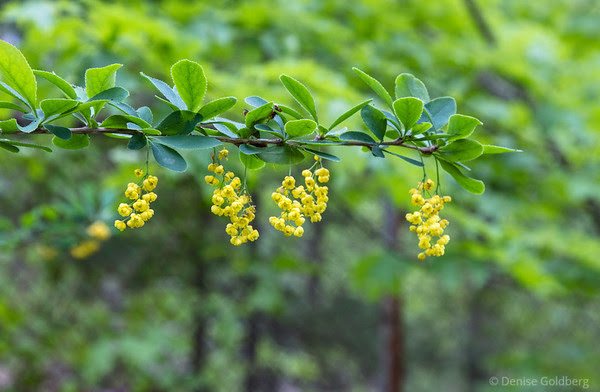 green leaves (and yellow flowers) against green
