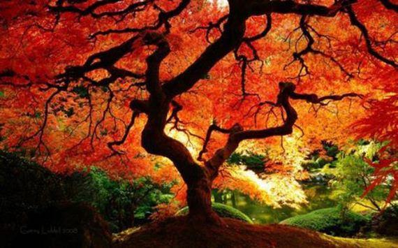 fall_time