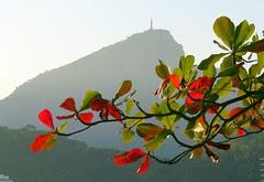 Outono no Rio