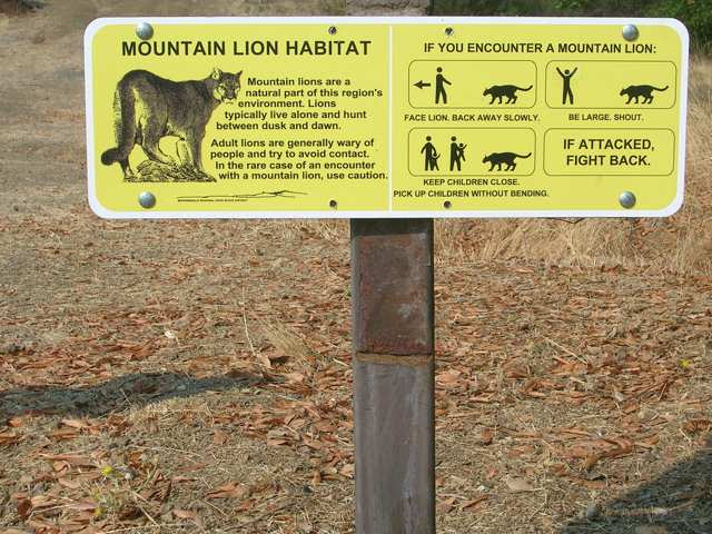 what-to-do-if-attacked-by-a-lion1