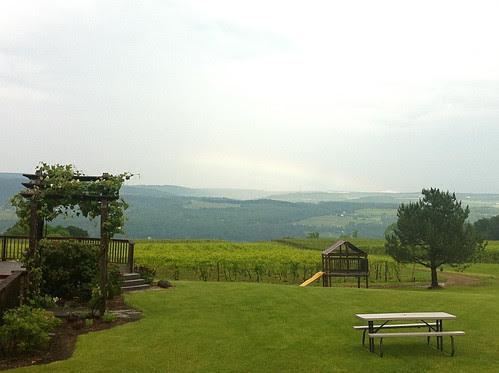 Lakewood Vineyards View