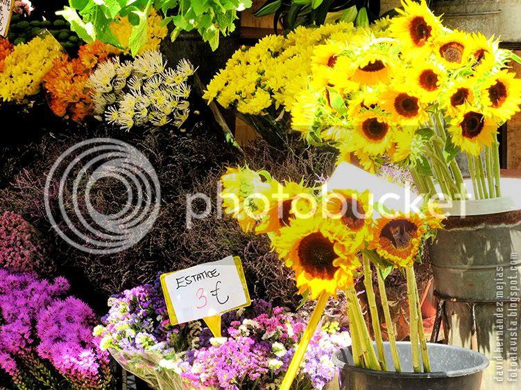 Detalle de un puesto de venta de flores en Las Ramblas de Barcelona
