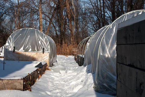 My Winter Garden in Late December