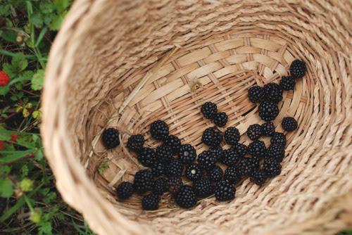 wild blackberries by nataliecreates on Flickr.