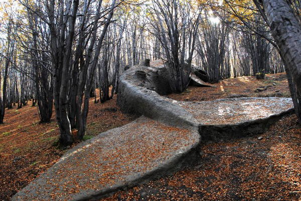 perierga.gr - Μια φάλαινα στο... δάσος!
