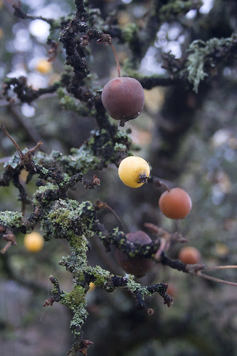 moss, lichen and fruit