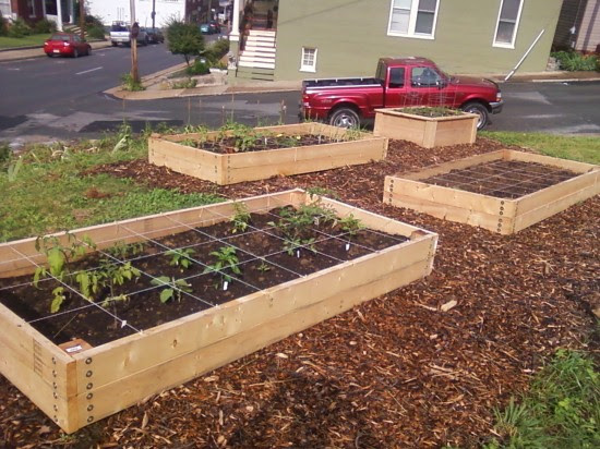 Raised beds for the garden: DIY or using a kit? — Transition Voice