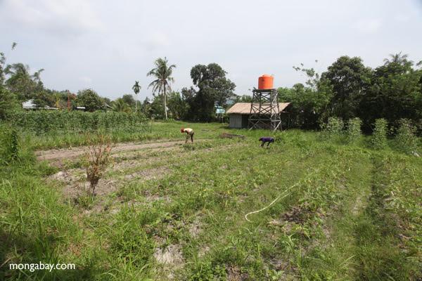 Organic farm in Indonesian Borneo. Photo by: Rhett A. Butler.