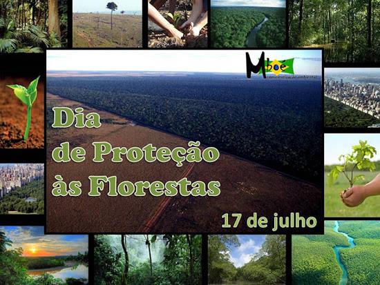 Dia de Proteção às Florestas Imagem 2