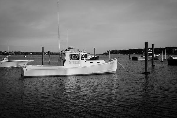 Squid, Edgartown