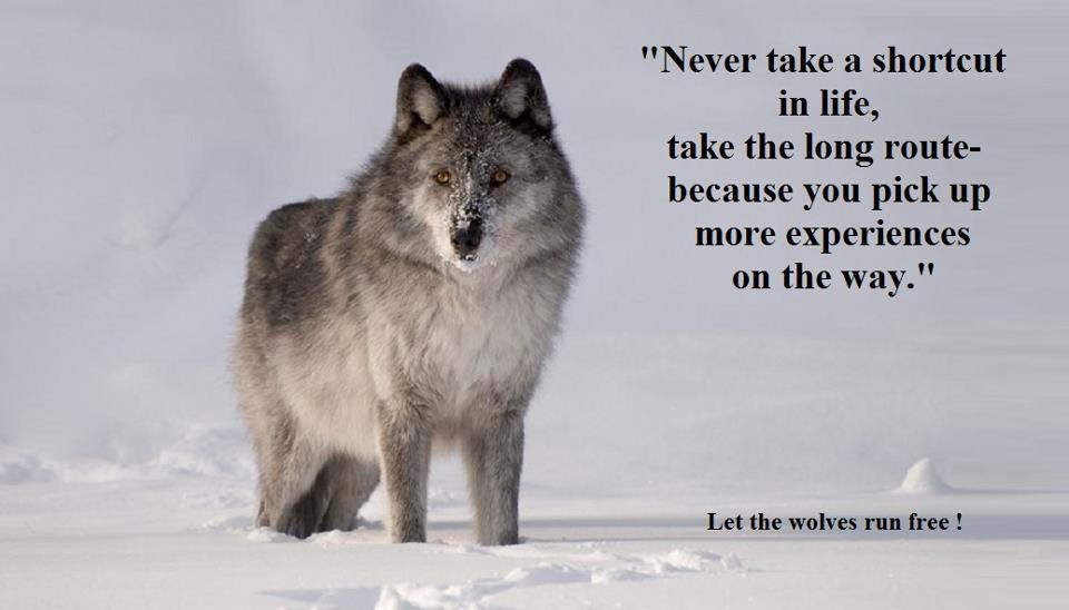 Lone Wolf Quotes Hd Wallpaper The Galleries Of Hd Wallpaper