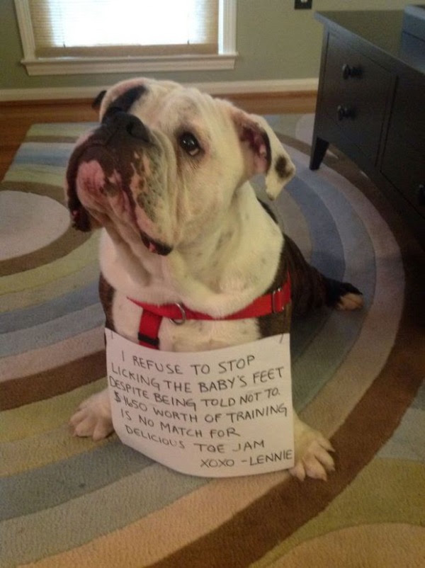 guilty-dogs-10