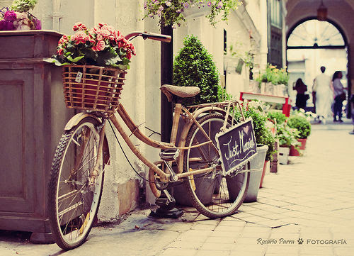Very Best Vintage Bike Photography with Flowers 500 x 361 · 66 kB · jpeg