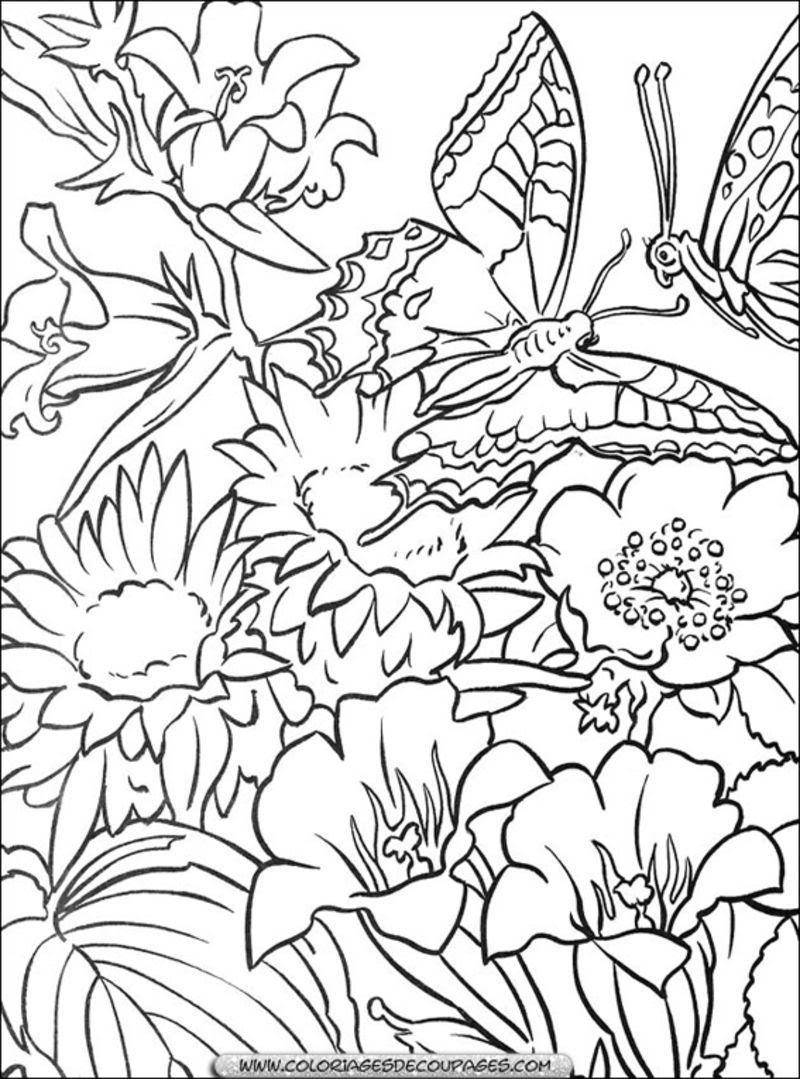 fleur 78 coloriage