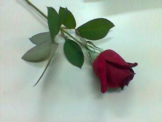 ...um doce de flor! by Menina Prendada - Manualidades da Dayse