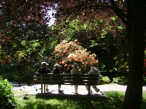 Rhododendron Meeting