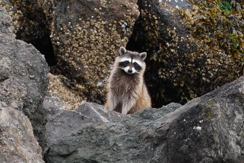 Harbor wildlife