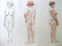 Proportion Studies - Female Model